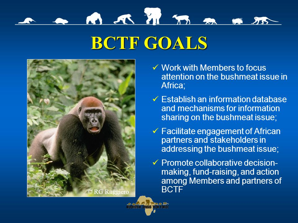 BCTF GOALS Work with Members to focus attention on the bushmeat issue in Africa; Establish an information database and mechanisms for information sharing on the bushmeat issue; Facilitate engagement of African partners and stakeholders in addressing the bushmeat issue; Promote collaborative decision- making, fund-raising, and action among Members and partners of BCTF © RG Ruggiero