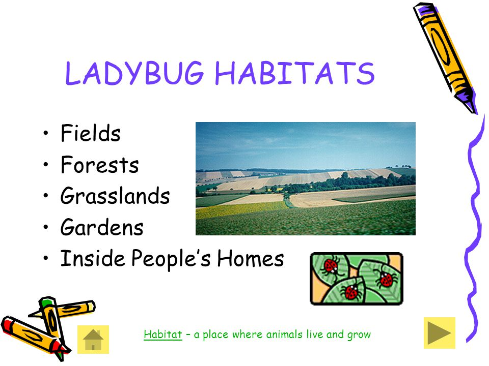 LADYBUG HABITATS Fields Forests Grasslands Gardens Inside People's Homes Habitat – a place where animals live and grow