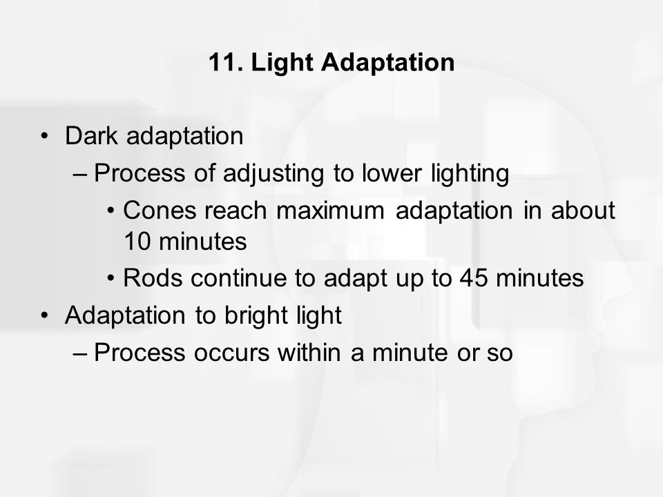 11. Light Adaptation Dark adaptation –Process of adjusting to lower lighting Cones reach maximum adaptation in about 10 minutes Rods continue to adapt