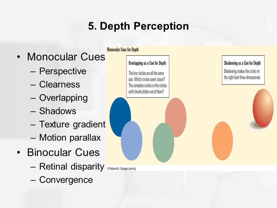 5. Depth Perception Monocular Cues –Perspective –Clearness –Overlapping –Shadows –Texture gradient –Motion parallax Binocular Cues –Retinal disparity
