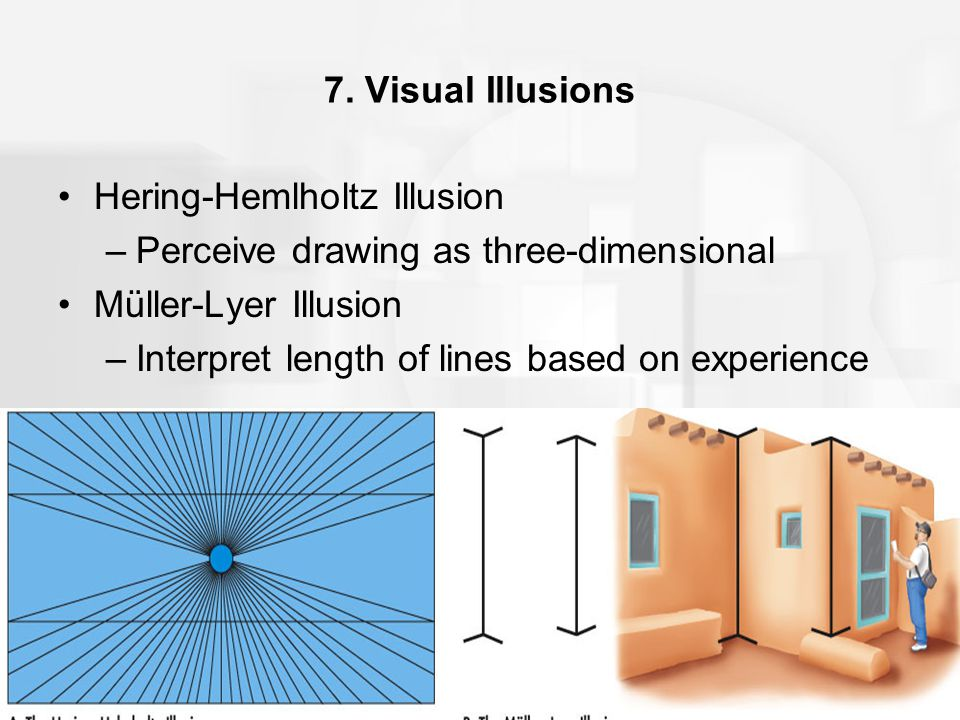 7. Visual Illusions Hering-Hemlholtz Illusion –Perceive drawing as three-dimensional Müller-Lyer Illusion –Interpret length of lines based on experien