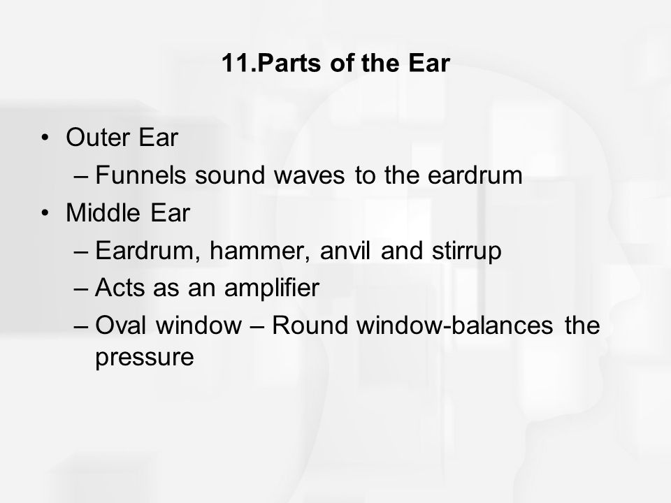 11.Parts of the Ear Outer Ear –Funnels sound waves to the eardrum Middle Ear –Eardrum, hammer, anvil and stirrup –Acts as an amplifier –Oval window –