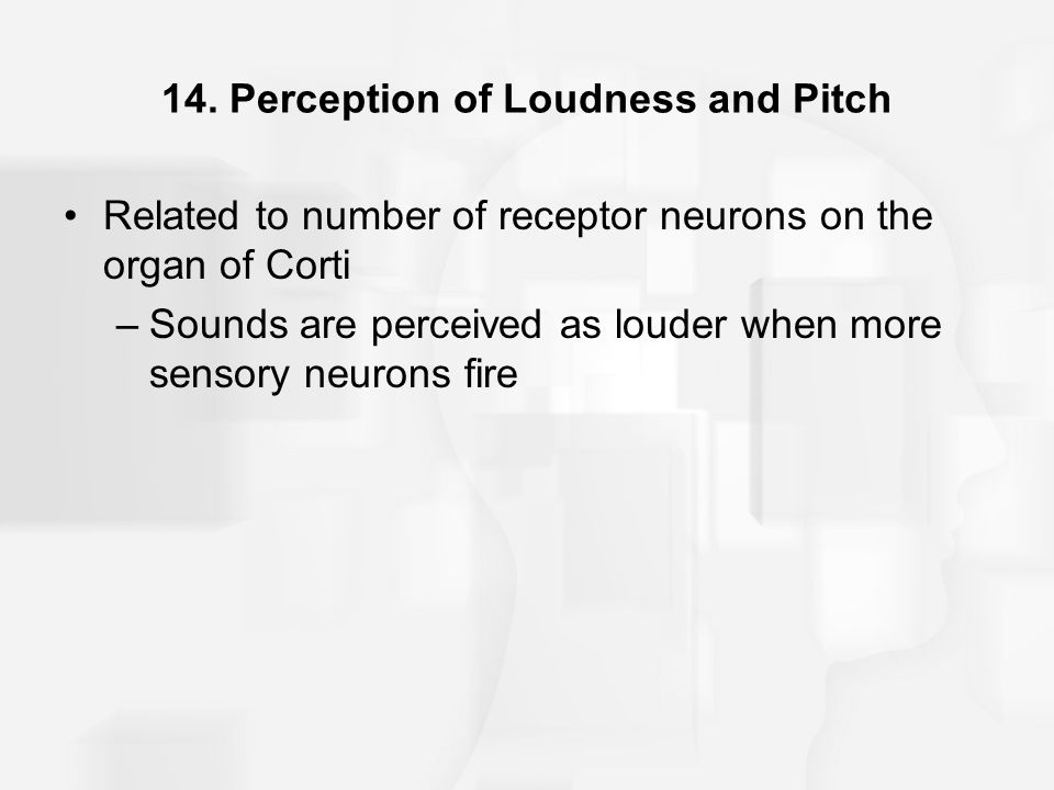14. Perception of Loudness and Pitch Related to number of receptor neurons on the organ of Corti –Sounds are perceived as louder when more sensory neu