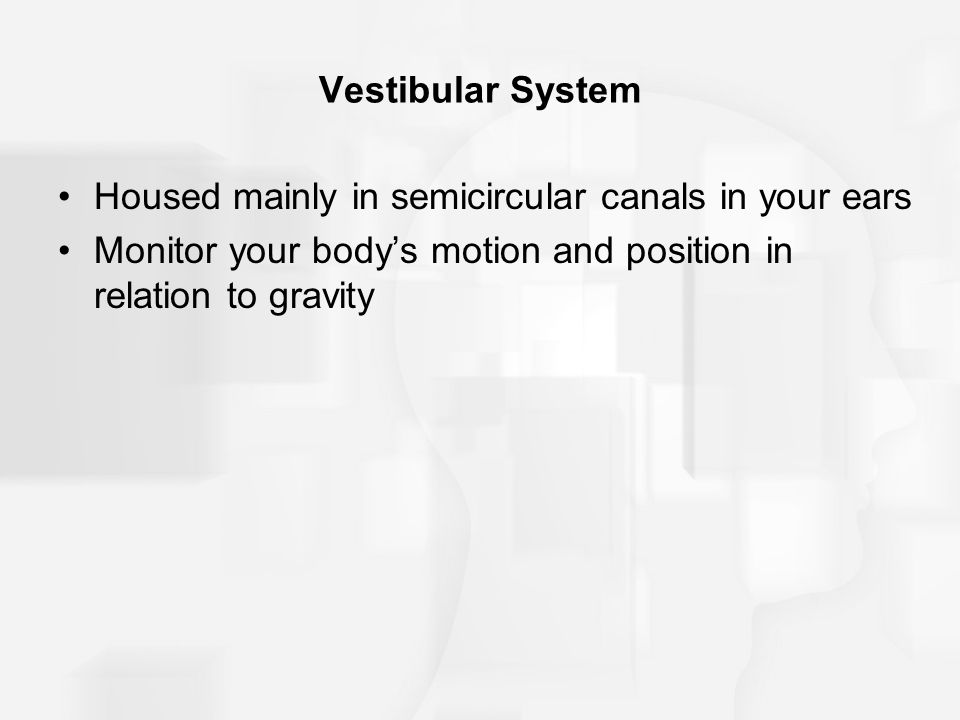 Vestibular System Housed mainly in semicircular canals in your ears Monitor your body's motion and position in relation to gravity