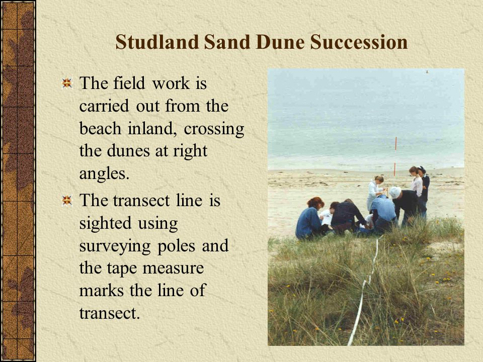 Studland Sand Dune Succession The field work is carried out from the beach inland, crossing the dunes at right angles.