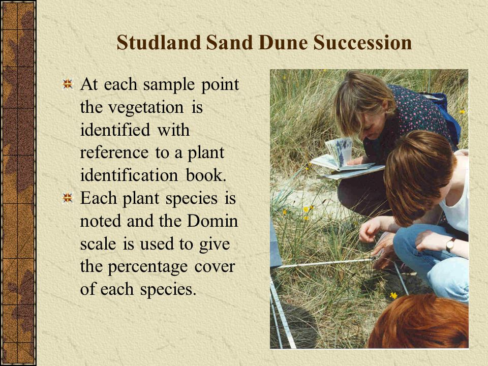 Studland Sand Dune Succession At each sample point the vegetation is identified with reference to a plant identification book.