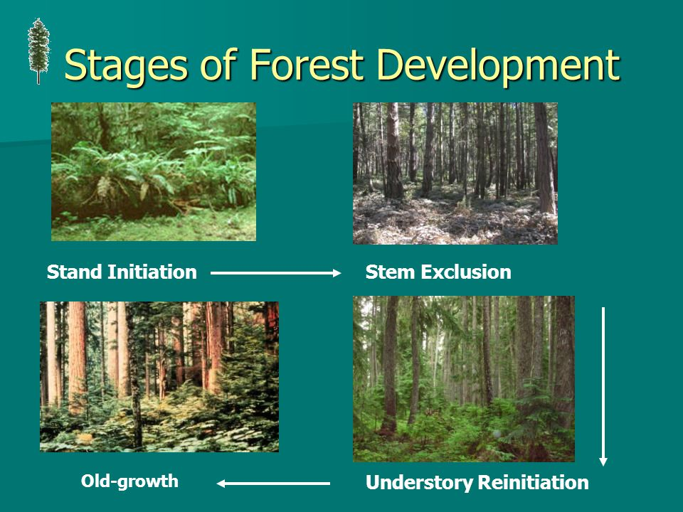 Stages of Forest Development Stand InitiationStem Exclusion Understory Reinitiation Old-growth
