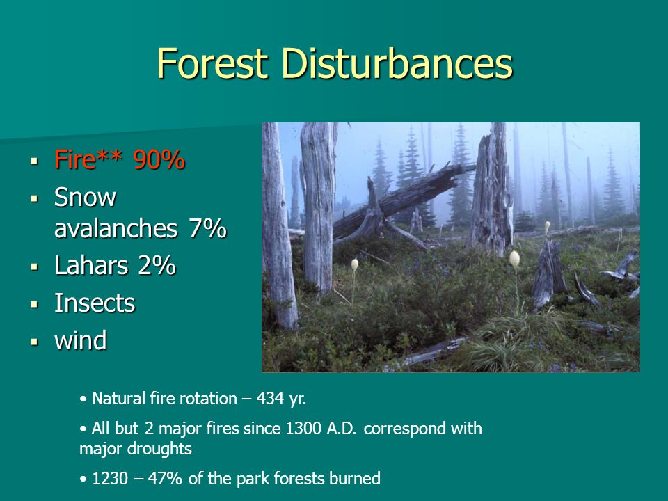 Forest Disturbances  Fire** 90%  Snow avalanches 7%  Lahars 2%  Insects  wind Natural fire rotation – 434 yr.
