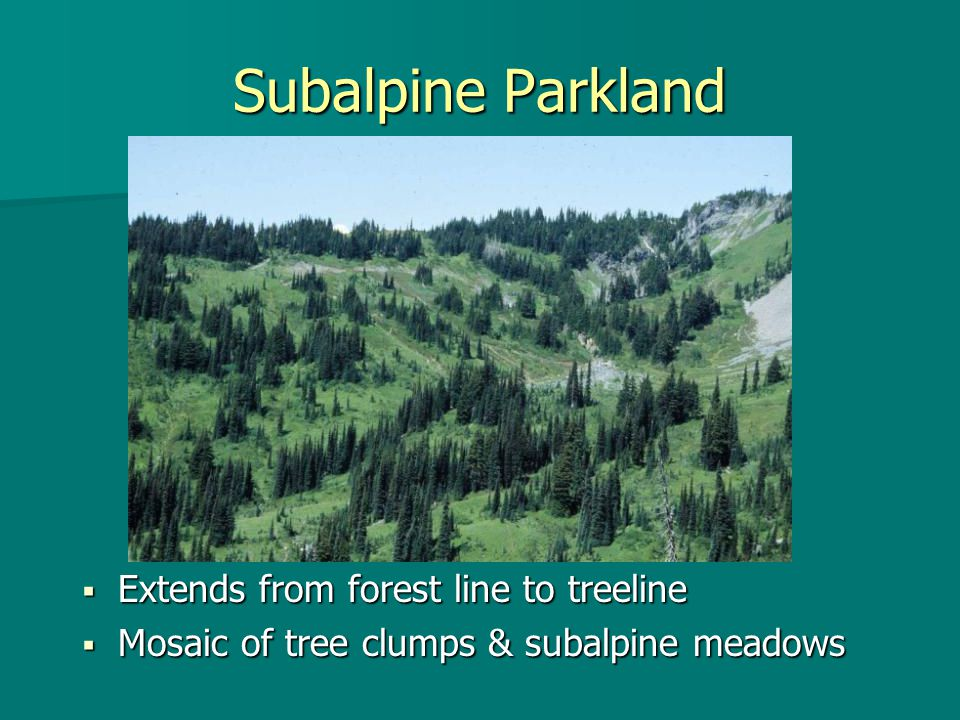 Subalpine Parkland  Extends from forest line to treeline  Mosaic of tree clumps & subalpine meadows