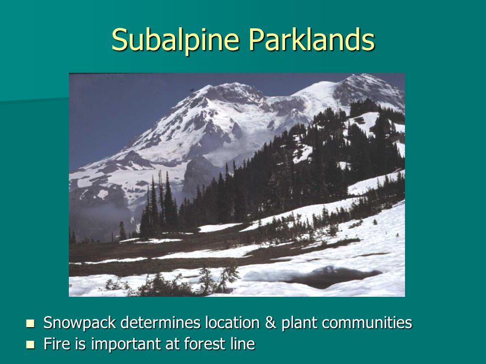Subalpine Parklands Snowpack determines location & plant communities Snowpack determines location & plant communities Fire is important at forest line