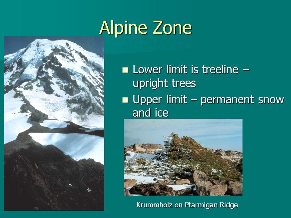 Alpine Zone Lower limit is treeline – upright trees Lower limit is treeline – upright trees Upper limit – permanent snow and ice Upper limit – permane