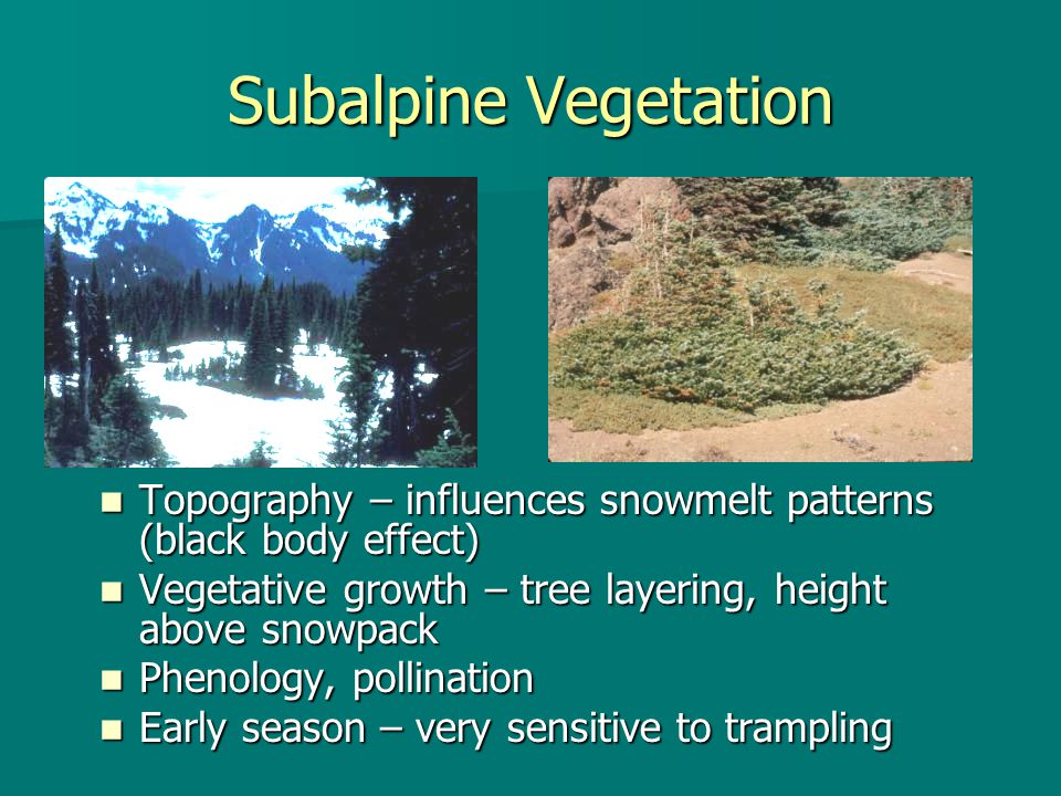 Subalpine Vegetation Topography – influences snowmelt patterns (black body effect) Topography – influences snowmelt patterns (black body effect) Vegetative growth – tree layering, height above snowpack Vegetative growth – tree layering, height above snowpack Phenology, pollination Phenology, pollination Early season – very sensitive to trampling Early season – very sensitive to trampling