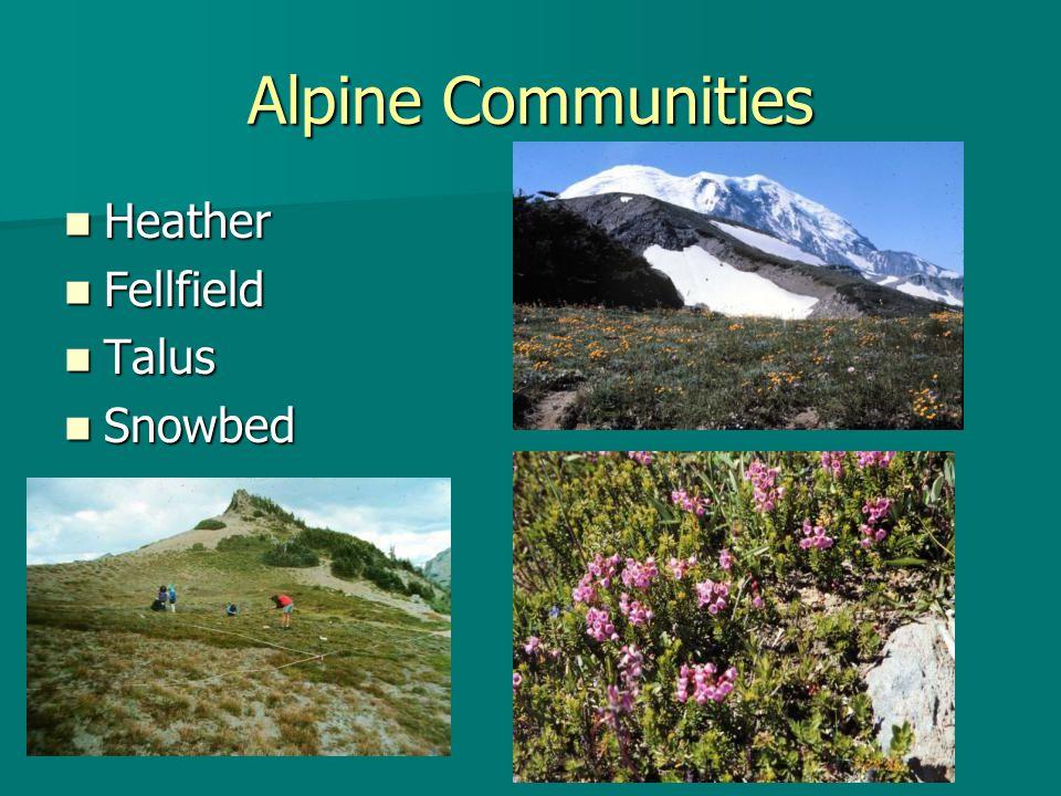 Alpine Communities Heather Heather Fellfield Fellfield Talus Talus Snowbed Snowbed