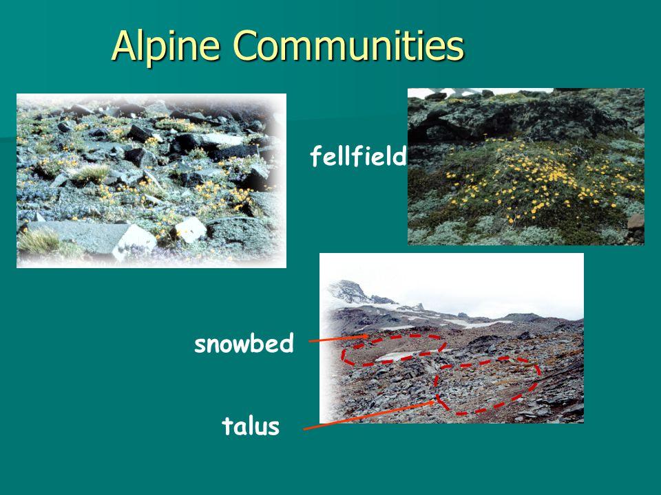 fellfield Alpine Communities snowbed talus