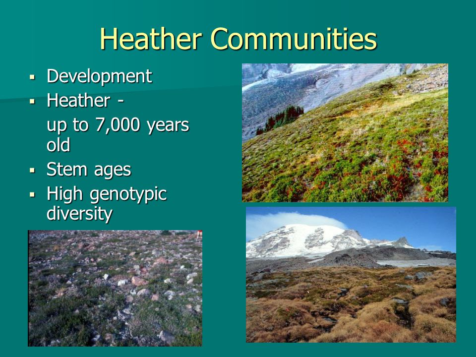 Heather Communities  Development  Heather - up to 7,000 years old  Stem ages  High genotypic diversity