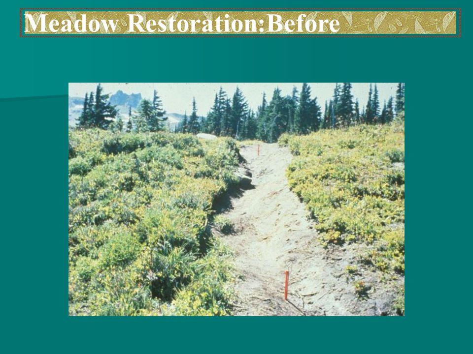 Meadow Restoration:Before