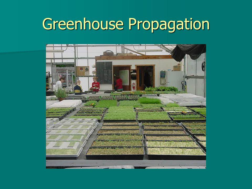Greenhouse Propagation