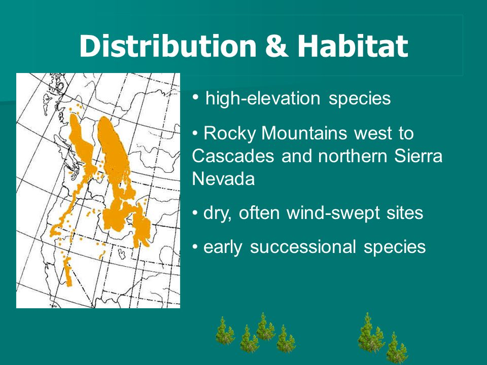 Distribution & Habitat high-elevation species Rocky Mountains west to Cascades and northern Sierra Nevada dry, often wind-swept sites early successional species
