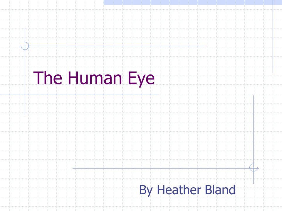 Vision Presentation I. The Human Eye II. Hardware of Visual Displays III.