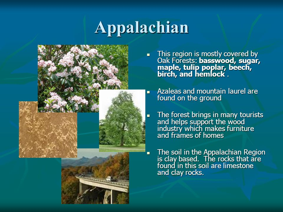 Wild Life of the Appalachian Deer Eagle Spiders Toads and Frogs Heron Mule Druthers Turtles Foxes
