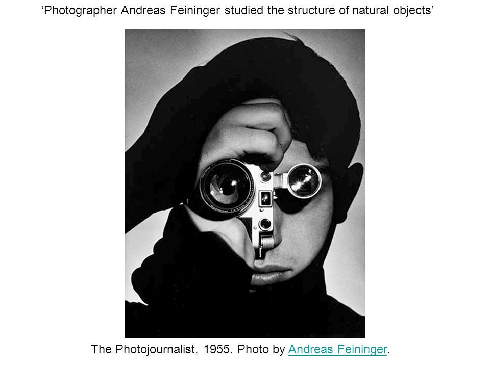 'Photographer Andreas Feininger studied the structure of natural objects' The Photojournalist, 1955.