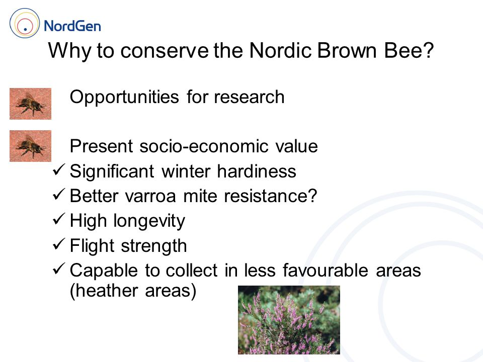 Why to conserve the Nordic Brown Bee.