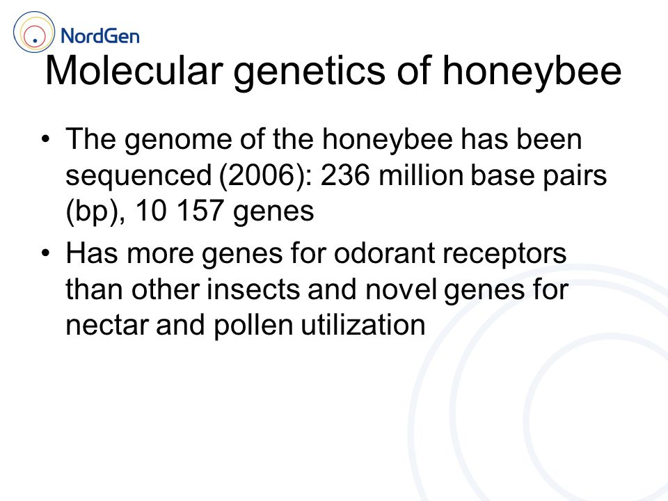 Molecular genetics of honeybee The genome of the honeybee has been sequenced (2006): 236 million base pairs (bp), 10 157 genes Has more genes for odorant receptors than other insects and novel genes for nectar and pollen utilization