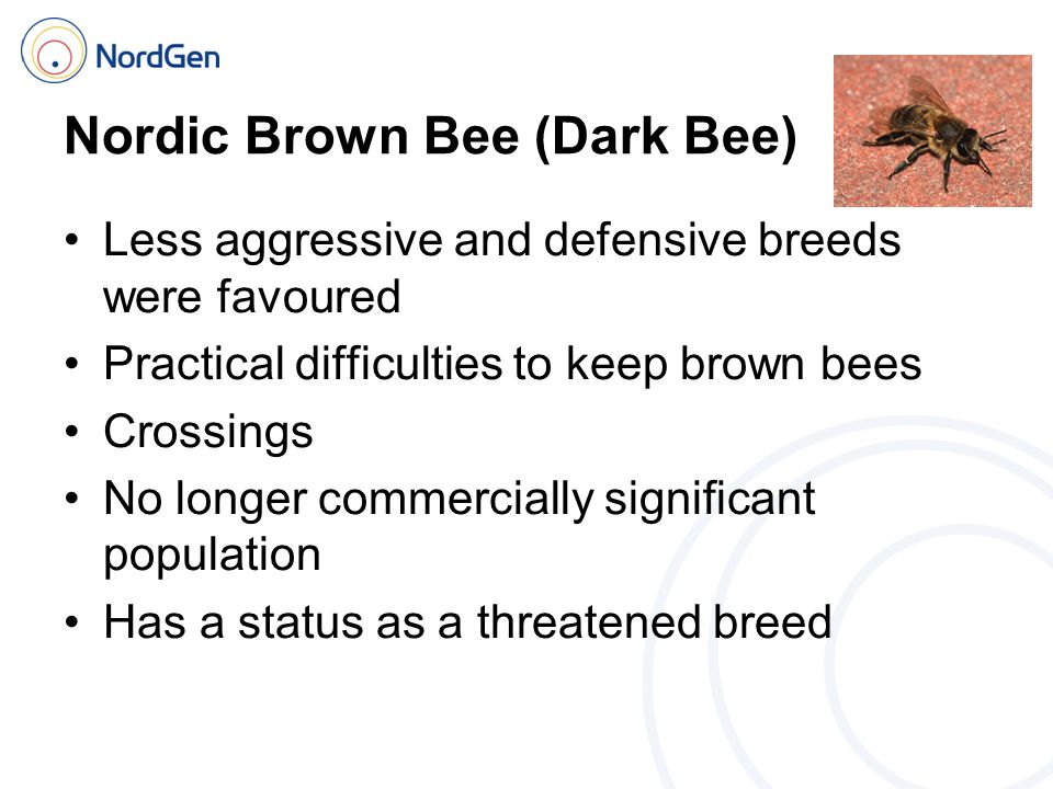Nordic Brown Bee (Dark Bee) Less aggressive and defensive breeds were favoured Practical difficulties to keep brown bees Crossings No longer commercially significant population Has a status as a threatened breed