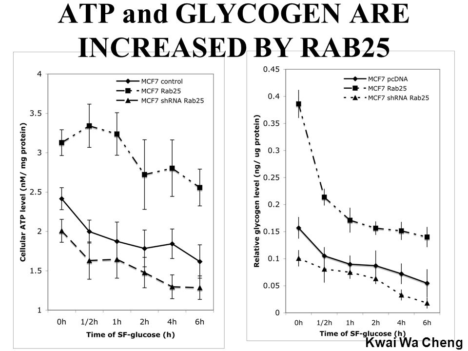 ATP and GLYCOGEN ARE INCREASED BY RAB25 Kwai Wa Cheng