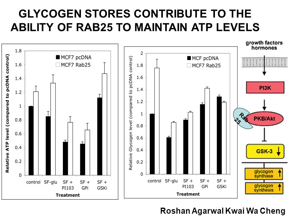 GLYCOGEN STORES CONTRIBUTE TO THE ABILITY OF RAB25 TO MAINTAIN ATP LEVELS Roshan Agarwal Kwai Wa Cheng Rab 25