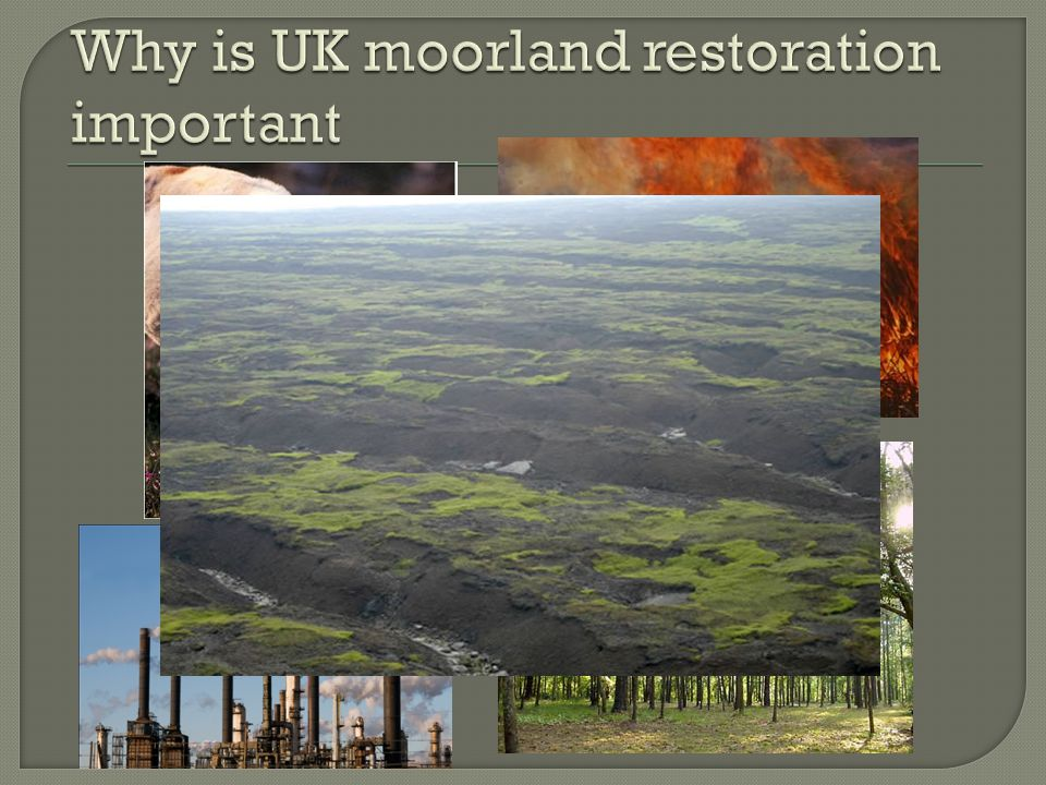  In 2003 the Moors for the Future Partnership formed, including organisations such as the Peak District National Park Authority, National Trust, Natural England, United Utilities, Severn Trent Water, Environment Agency, Yorkshire Water, Derbyshire County Council and RSPB.