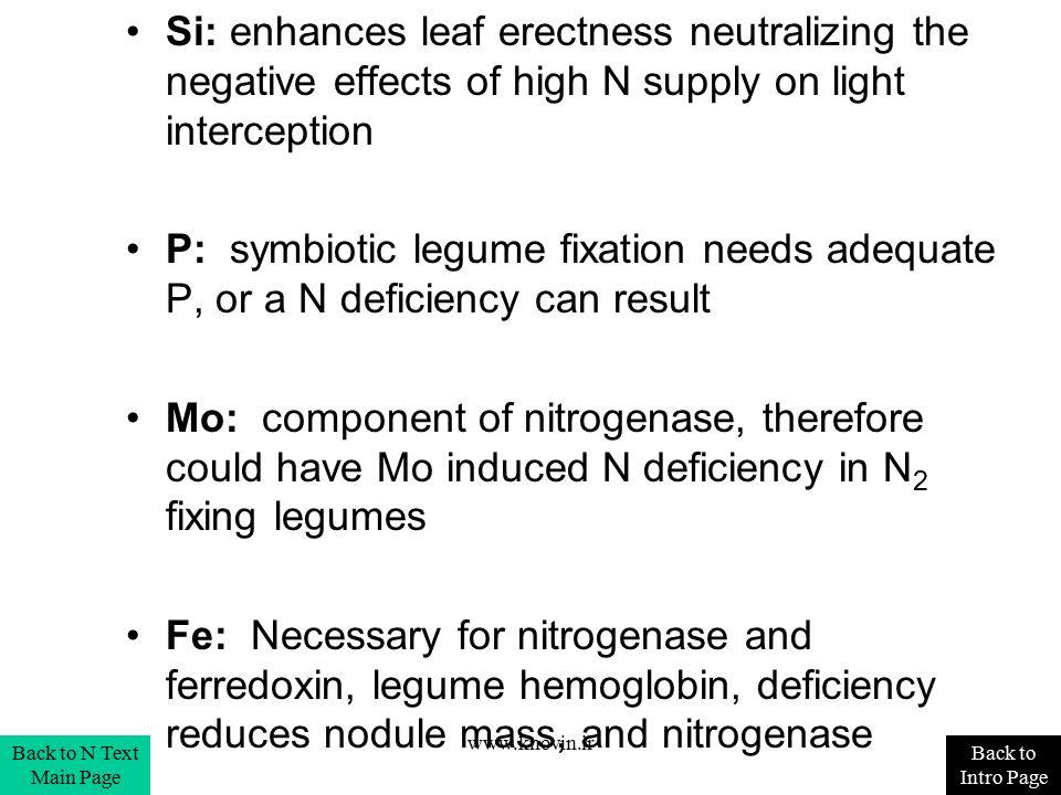 Si: enhances leaf erectness neutralizing the negative effects of high N supply on light interception P: symbiotic legume fixation needs adequate P, or