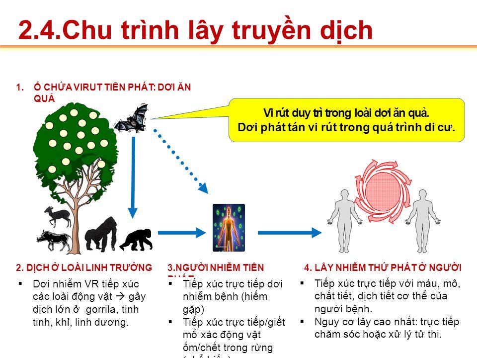 2.3.Nguồn bệnh  Dơi quả.  Khỉ đột.  Linh dương.  Tinh tinh