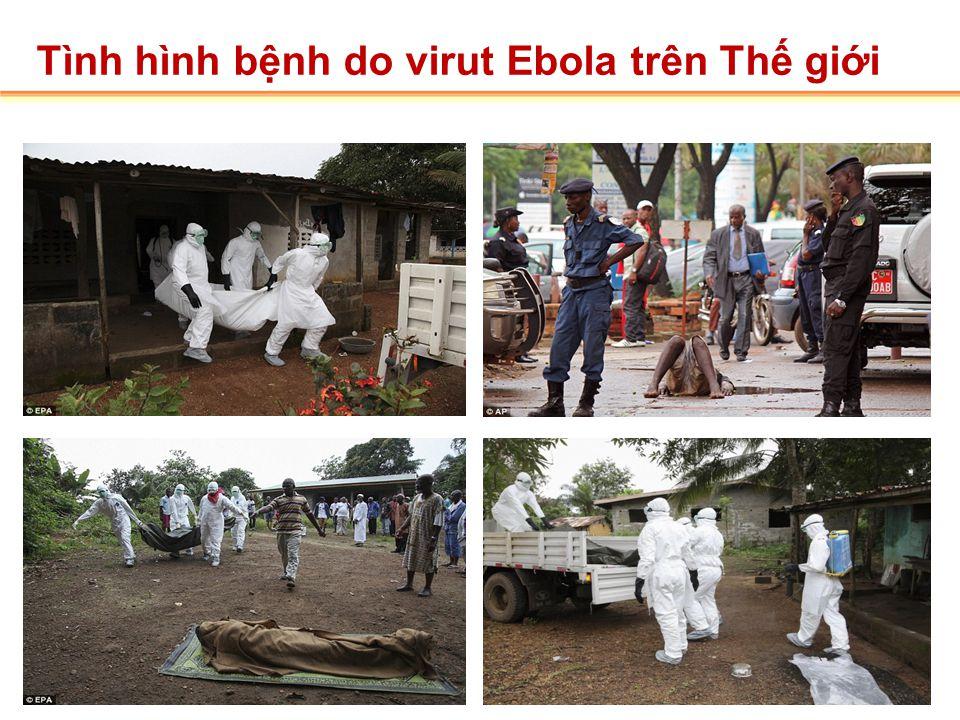 Tình hình bệnh do virut Ebola trên Thế giới