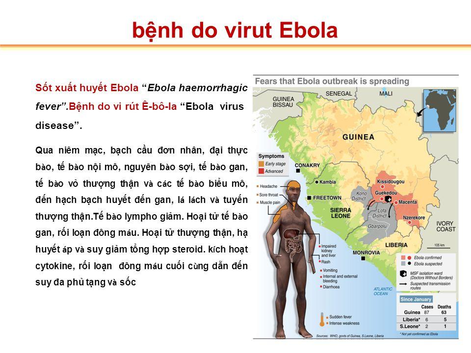 1. Dịch tễ học bệnh do virut Ebola