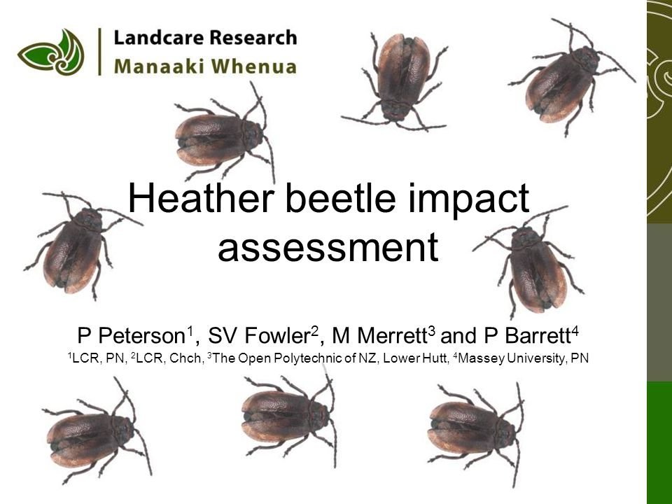 P Peterson 1, SV Fowler 2, M Merrett 3 and P Barrett 4 1 LCR, PN, 2 LCR, Chch, 3 The Open Polytechnic of NZ, Lower Hutt, 4 Massey University, PN Heather beetle impact assessment