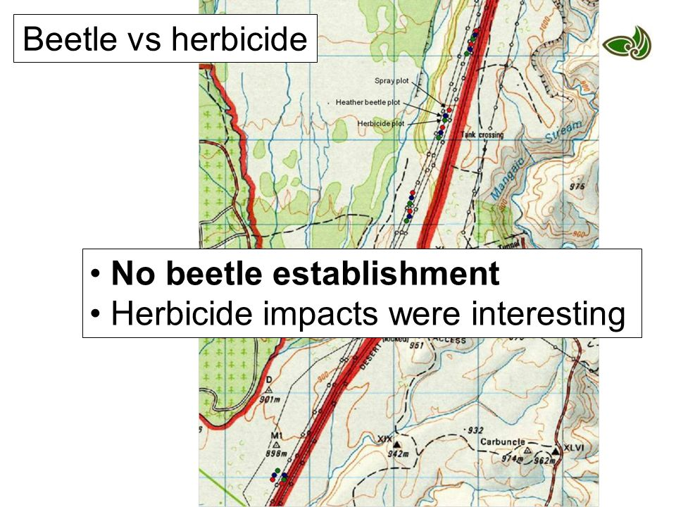No beetle establishment Herbicide impacts were interesting Beetle vs herbicide