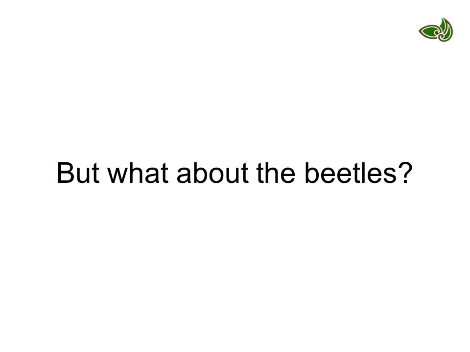 But what about the beetles
