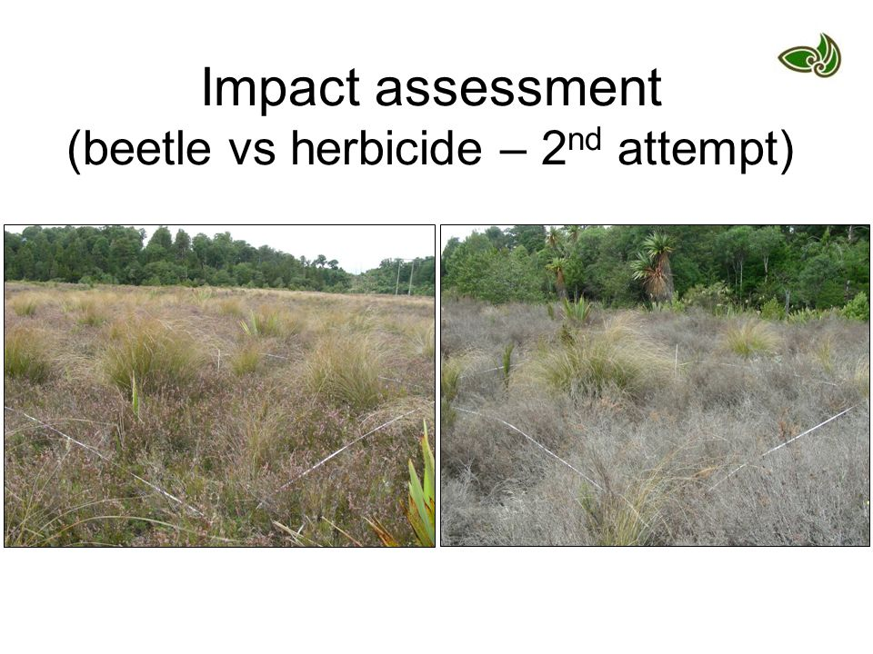 Impact assessment (beetle vs herbicide – 2 nd attempt)
