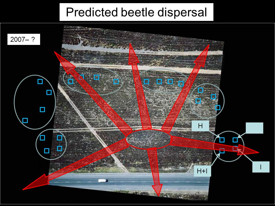 2007– I H+I H Predicted beetle dispersal