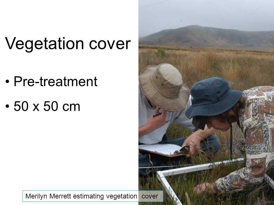 Vegetation cover Pre-treatment 50 x 50 cm Merilyn Merrett estimating vegetation cover
