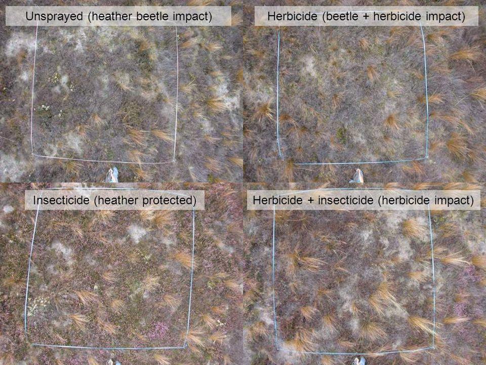 Unsprayed (heather beetle impact)Herbicide (beetle + herbicide impact) Insecticide (heather protected)Herbicide + insecticide (herbicide impact)