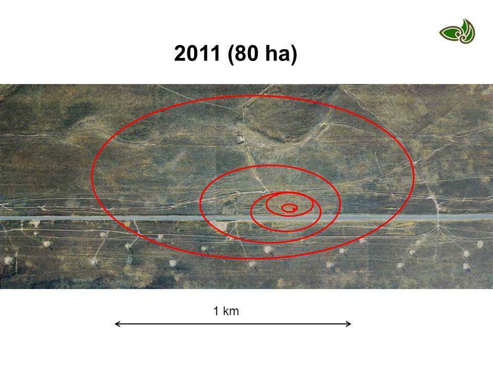 1 km 2011 (80 ha).