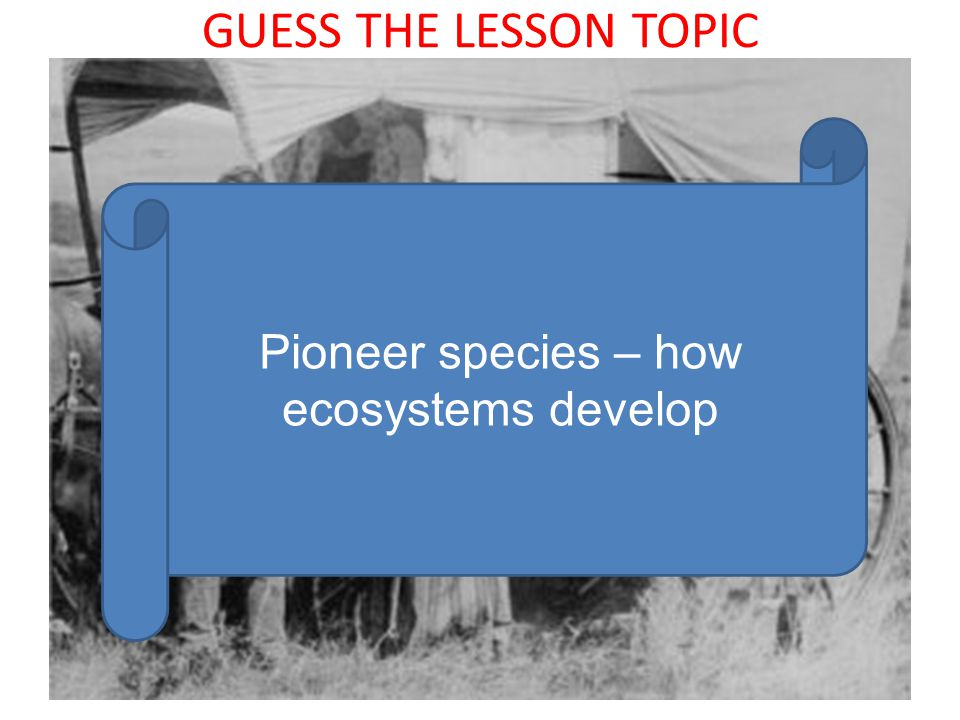 GUESS THE LESSON TOPIC Pioneer species – how ecosystems develop