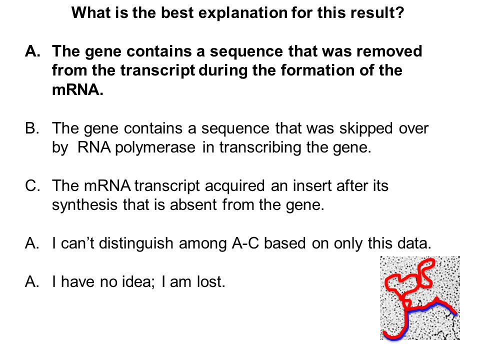 What is the best explanation for this result? A.The gene contains a sequence that was removed from the transcript during the formation of the mRNA. B.