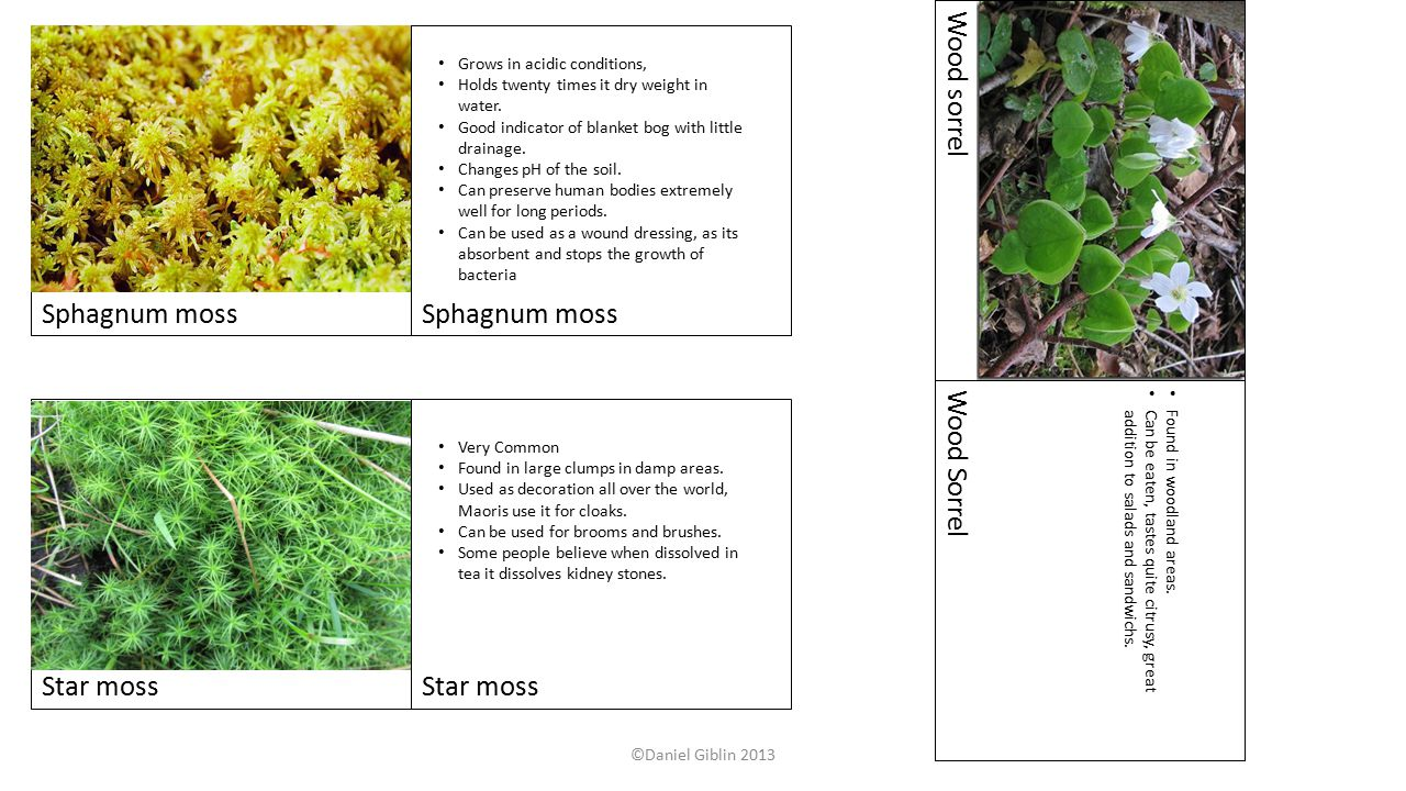 Sphagnum moss Star moss Wood sorrel Wood Sorrel Very Common Found in large clumps in damp areas.