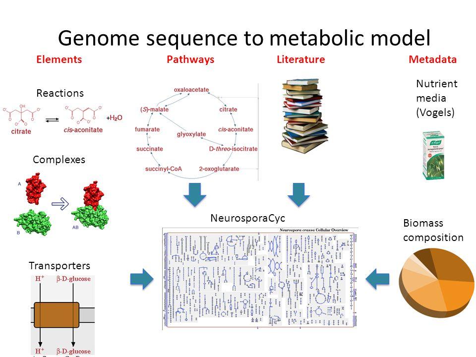 Genome sequence to metabolic model PathwaysLiterature Nutrient media (Vogels) NeurosporaCyc ElementsMetadata Complexes Reactions Transporters Biomass composition