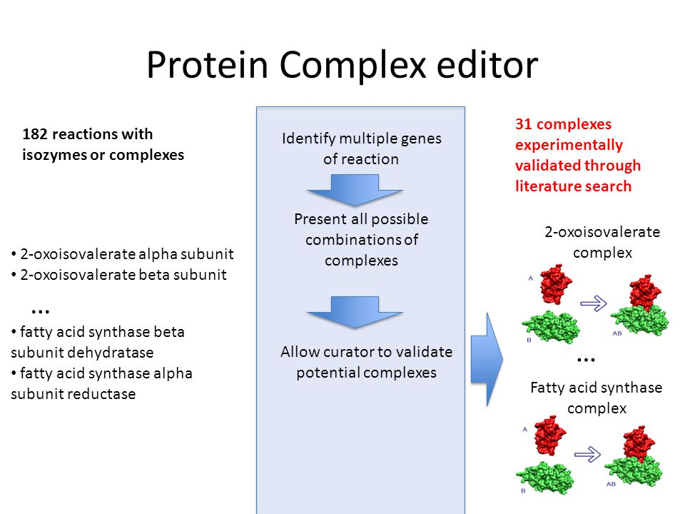 Protein Complex editor 182 reactions with isozymes or complexes 31 complexes experimentally validated through literature search 2-oxoisovalerate alpha subunit 2-oxoisovalerate beta subunit … fatty acid synthase beta subunit dehydratase fatty acid synthase alpha subunit reductase Identify multiple genes of reaction Allow curator to validate potential complexes 2-oxoisovalerate complex Present all possible combinations of complexes Fatty acid synthase complex …