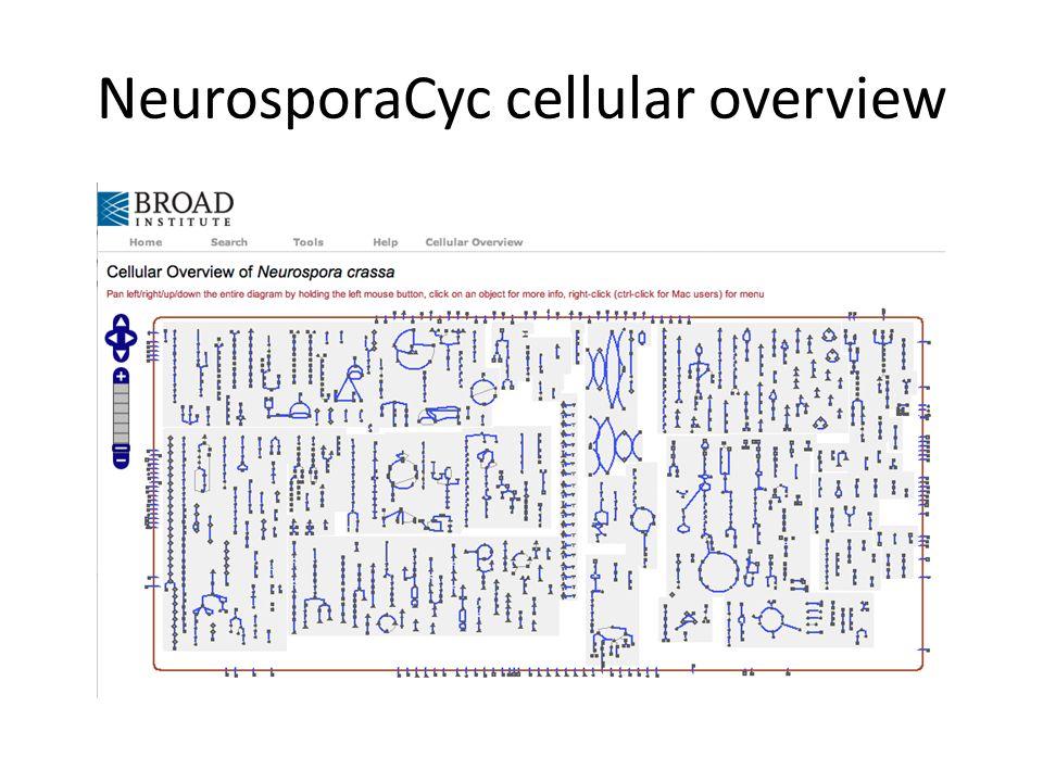 NeurosporaCyc cellular overview