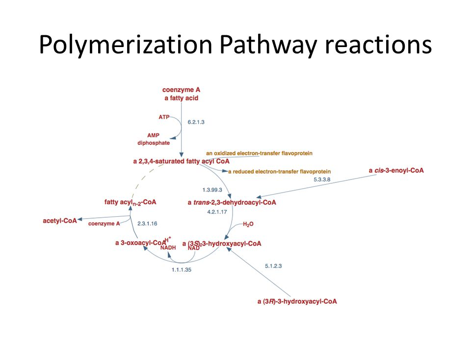 Polymerization Pathway reactions